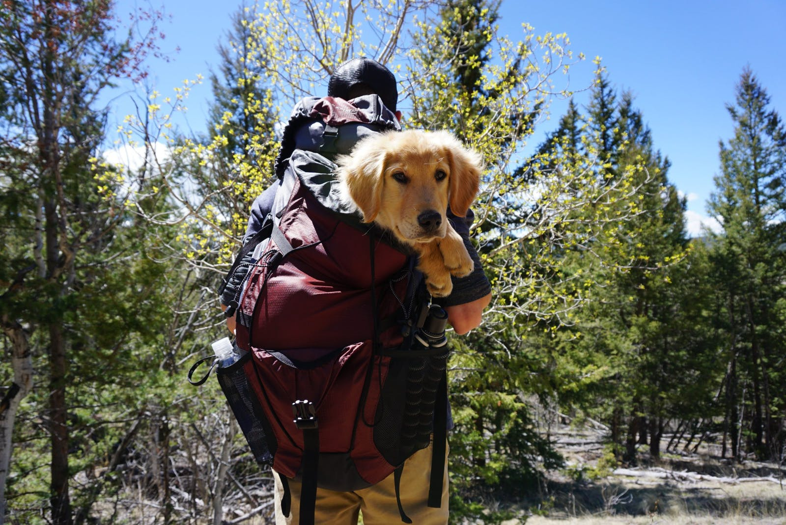 Man taking a hike with dog in backpack